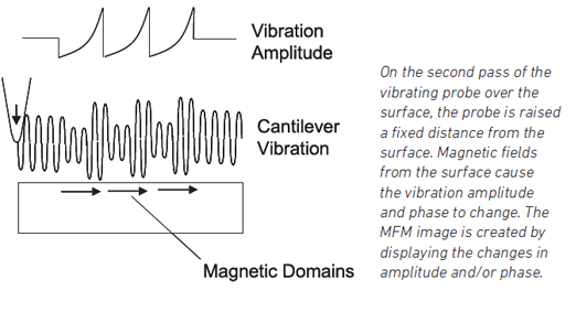 Magnetic fields change vibration amplitude and phase